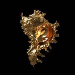 Goldene Meeresschnecke als 3D-Rendering